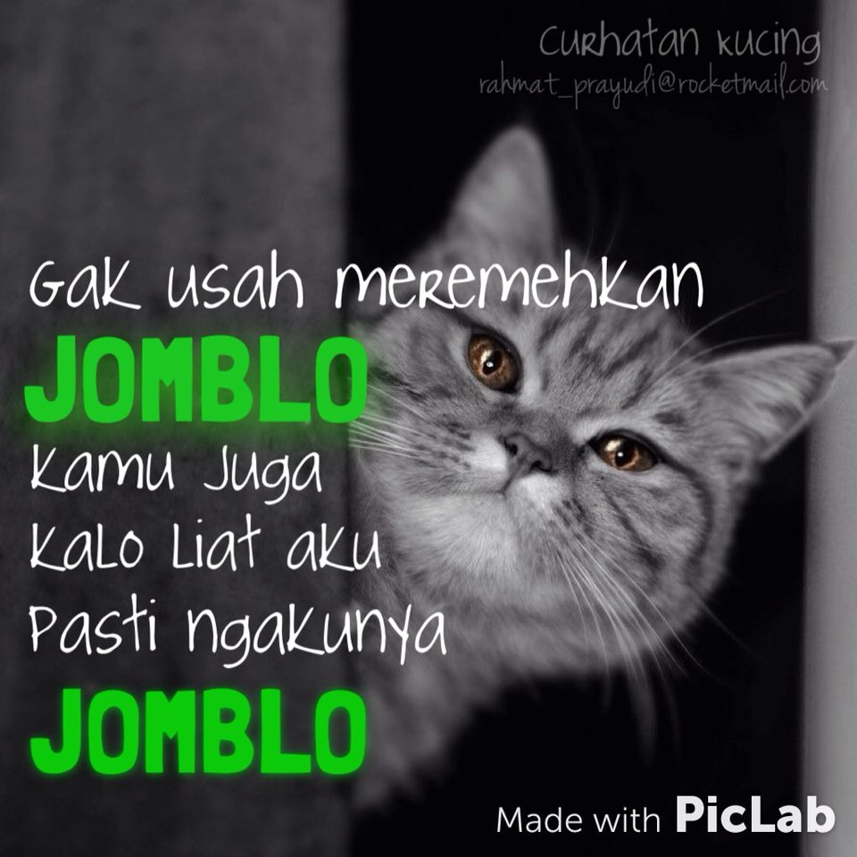 Gambar Kucing Lucu Dengan Kata Kata Galau