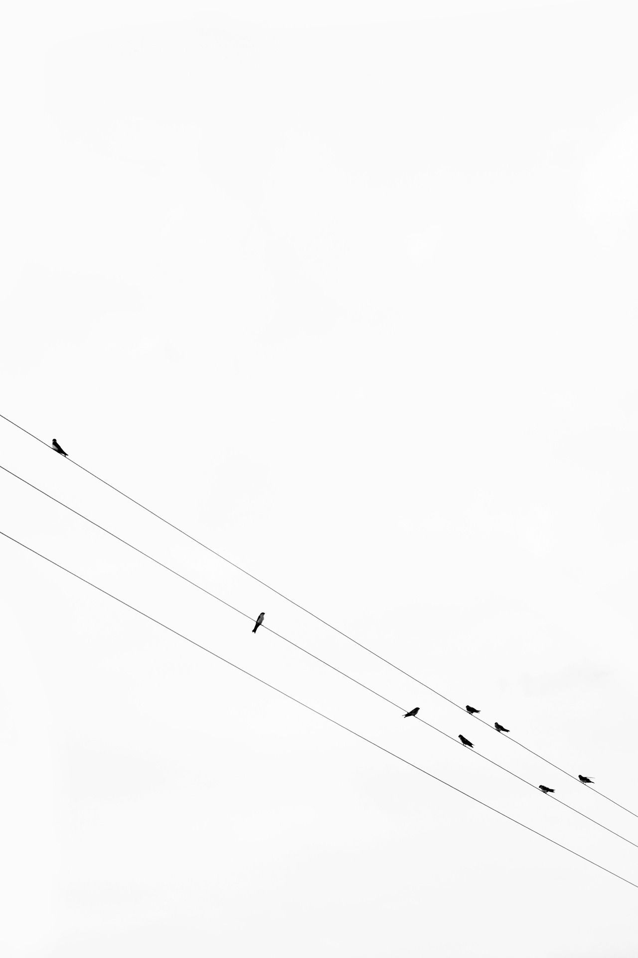 On A Wire White Aesthetic Minimalist Wallpaper Minimalist Photography