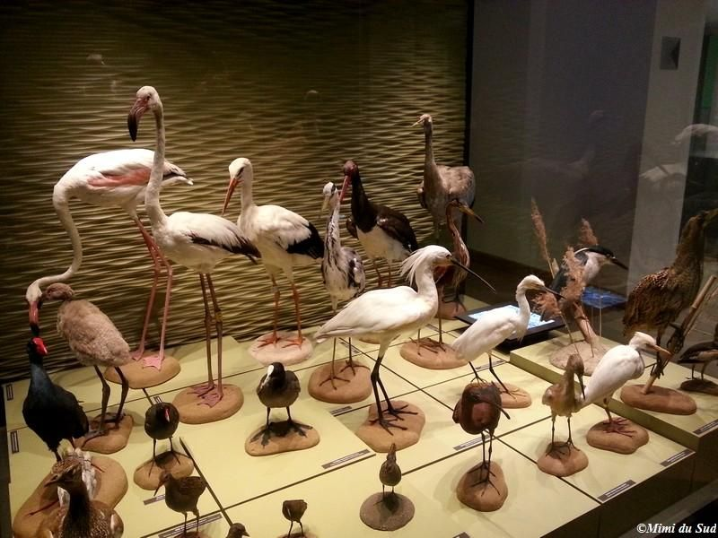 Idee dressoir provence toulon beelden : Museum d'histoire naturelle de Toulon et du Var (Natural History ...