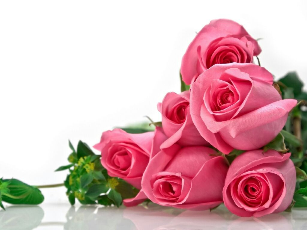 Beautiful Flowers For Flower Wallpapers Roses
