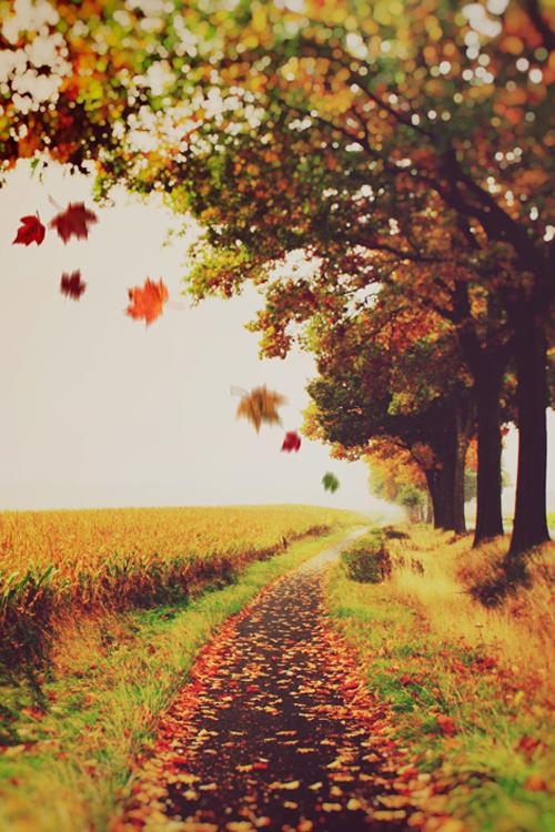 Autumn by JULIA DAVILA-LAMPE