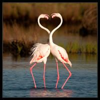 Lovers  by Giangiorgio Crisponi