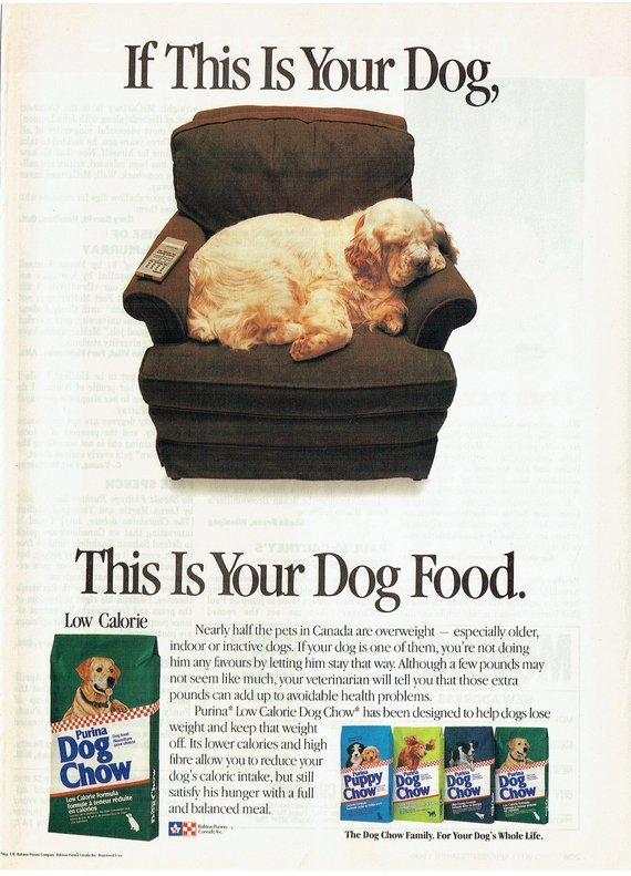 1989 Advertisement Purina Dog Chow Cocker Spaniel Couch