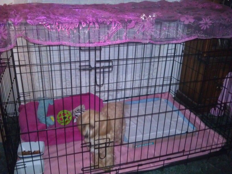 Dog Crate with 1 yr old Maltipoo.   DOGS BEDS/CRATES   Pinterest