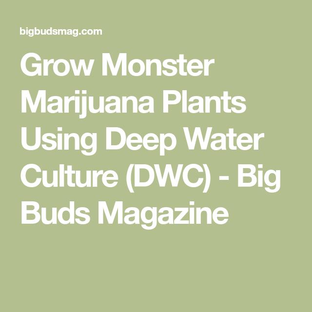 Grow Monster Buds