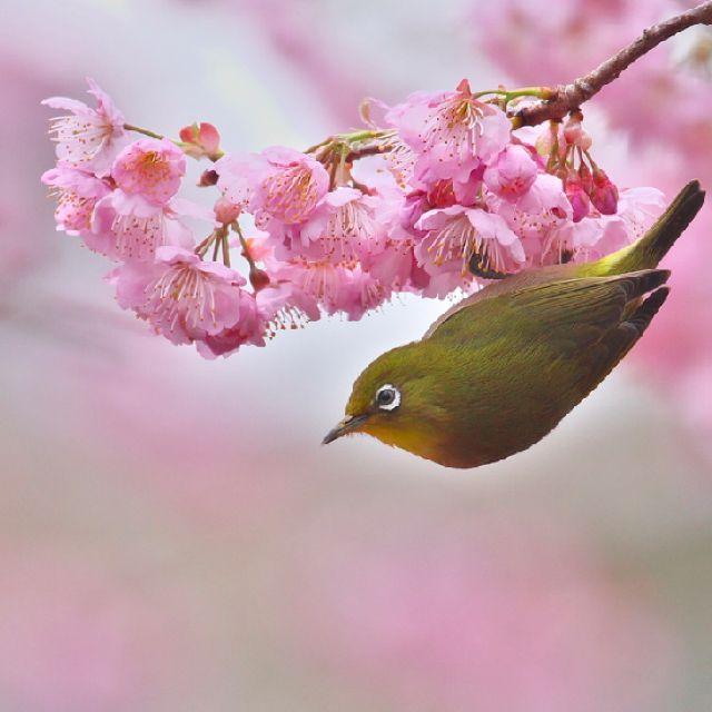 꽃에 거꾸로 매달린(?) 새.