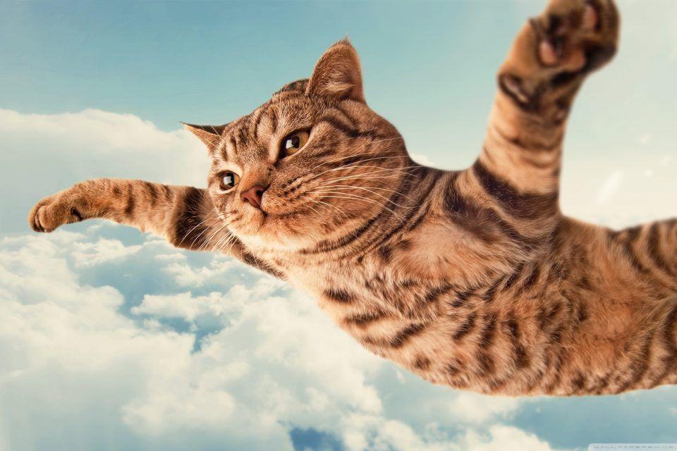I Belive I Can Fly