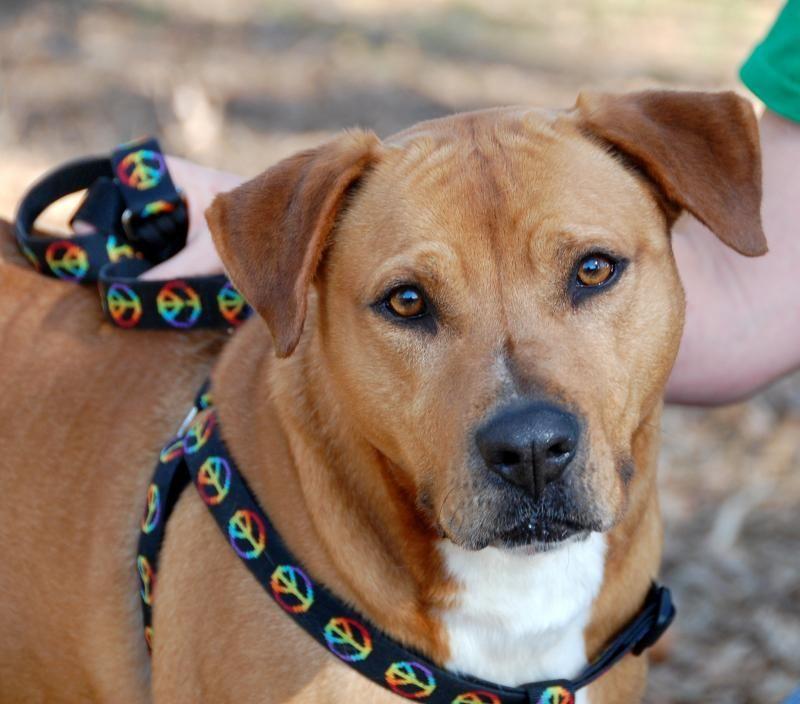 Adopt MC on Dogs, Animals, Adoption