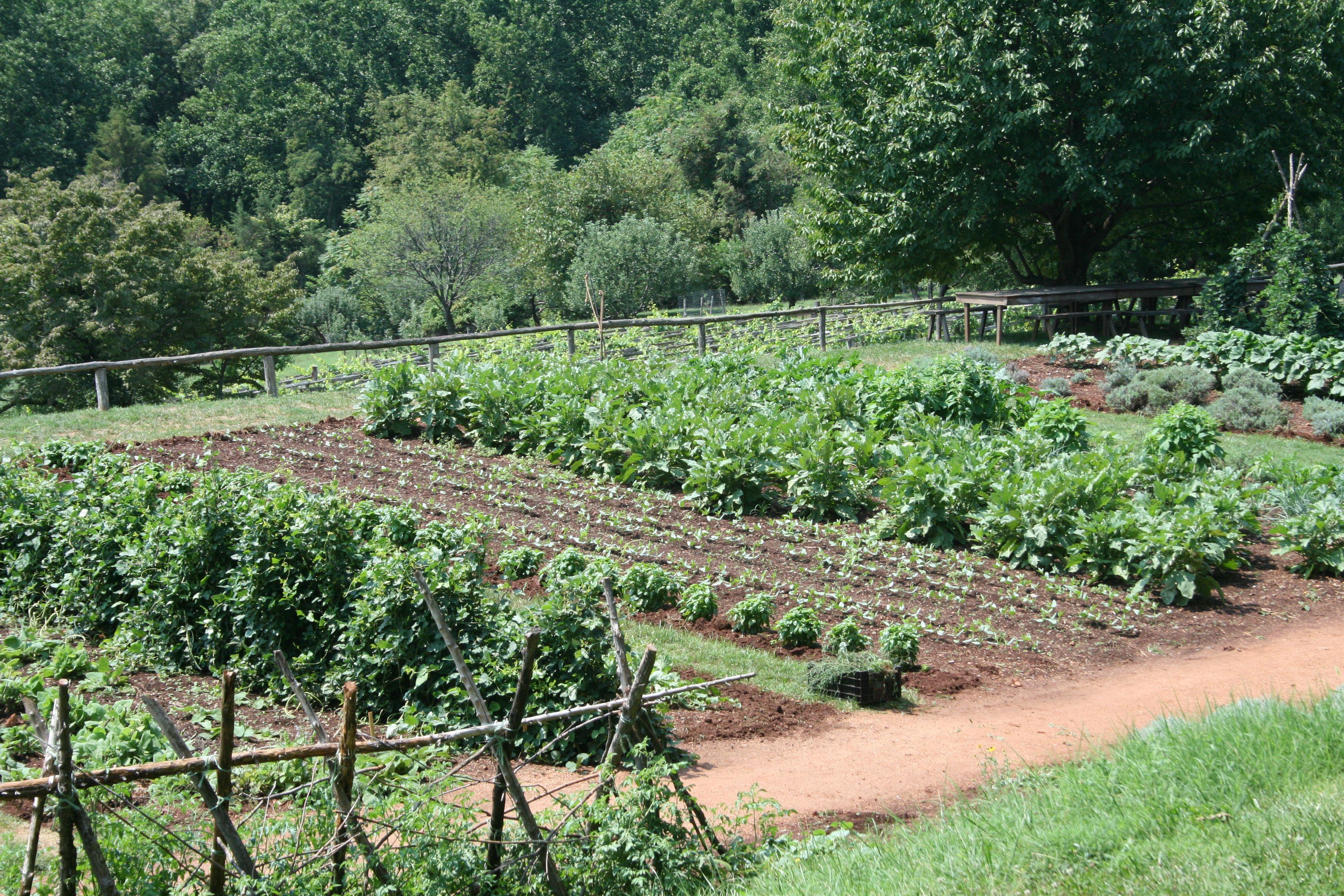 1700 S Gardens Functioning Vegetable Garden That Puts My Own To Shame Still Using Garden Pictures Vegetable Garden Planner Vegetable Garden