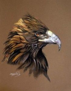 Aigle royal dessin recherche google art animaux - Dessin de aigle ...
