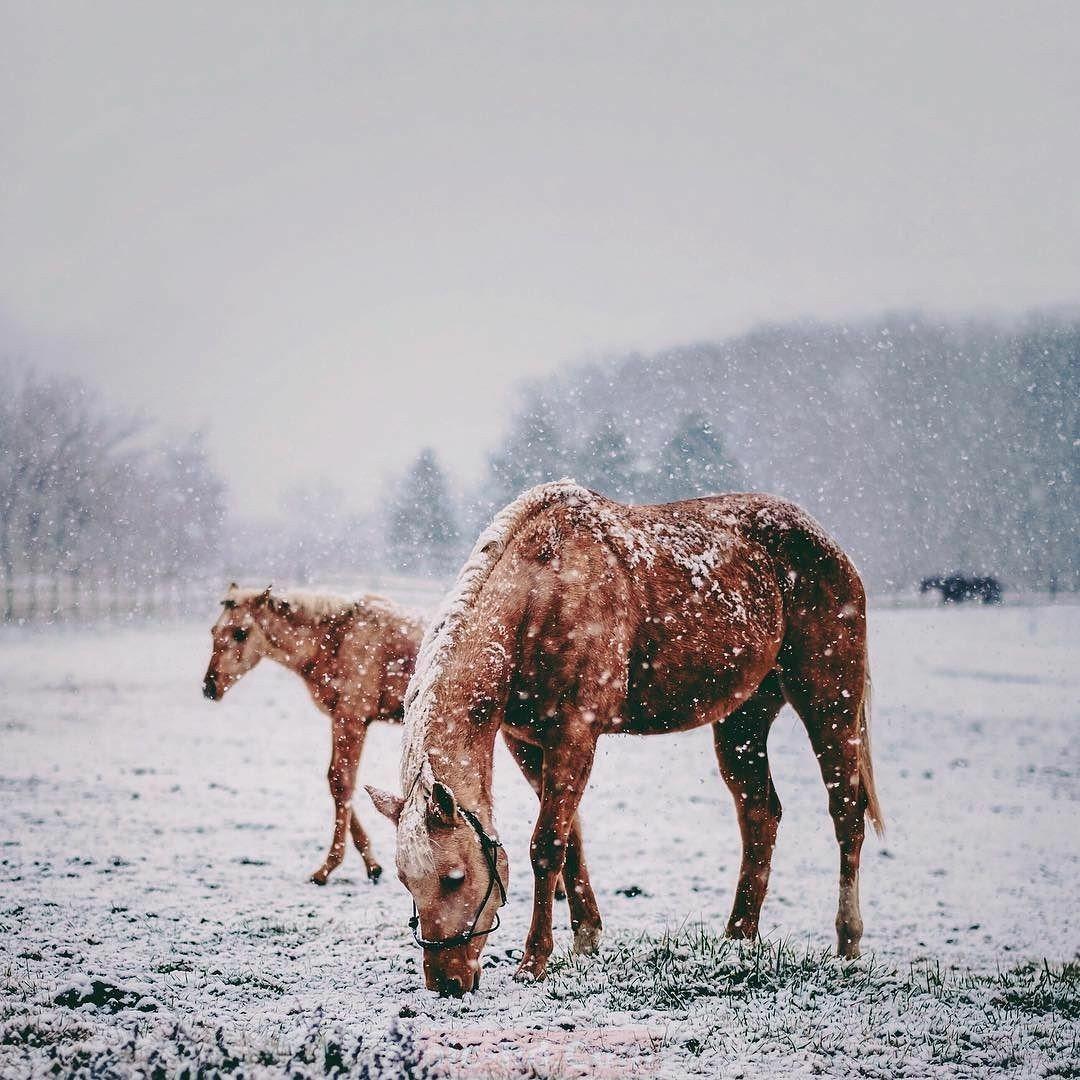 أجمل خلفيات خيول صور الحصان In 2021 Animals Photoshop Illustration