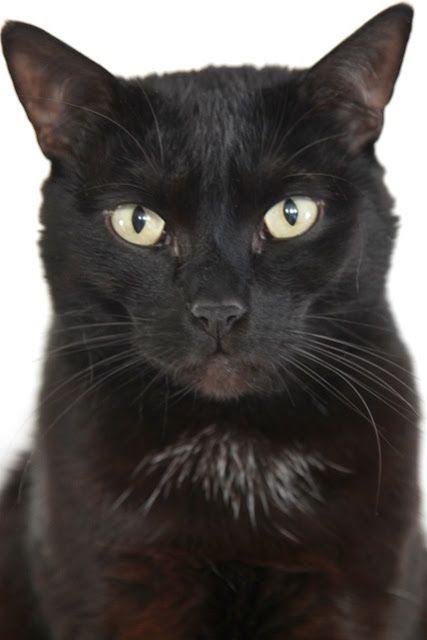 Čierna mačička Fu