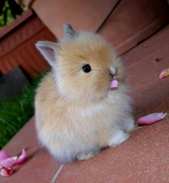 I need this bunny!!!