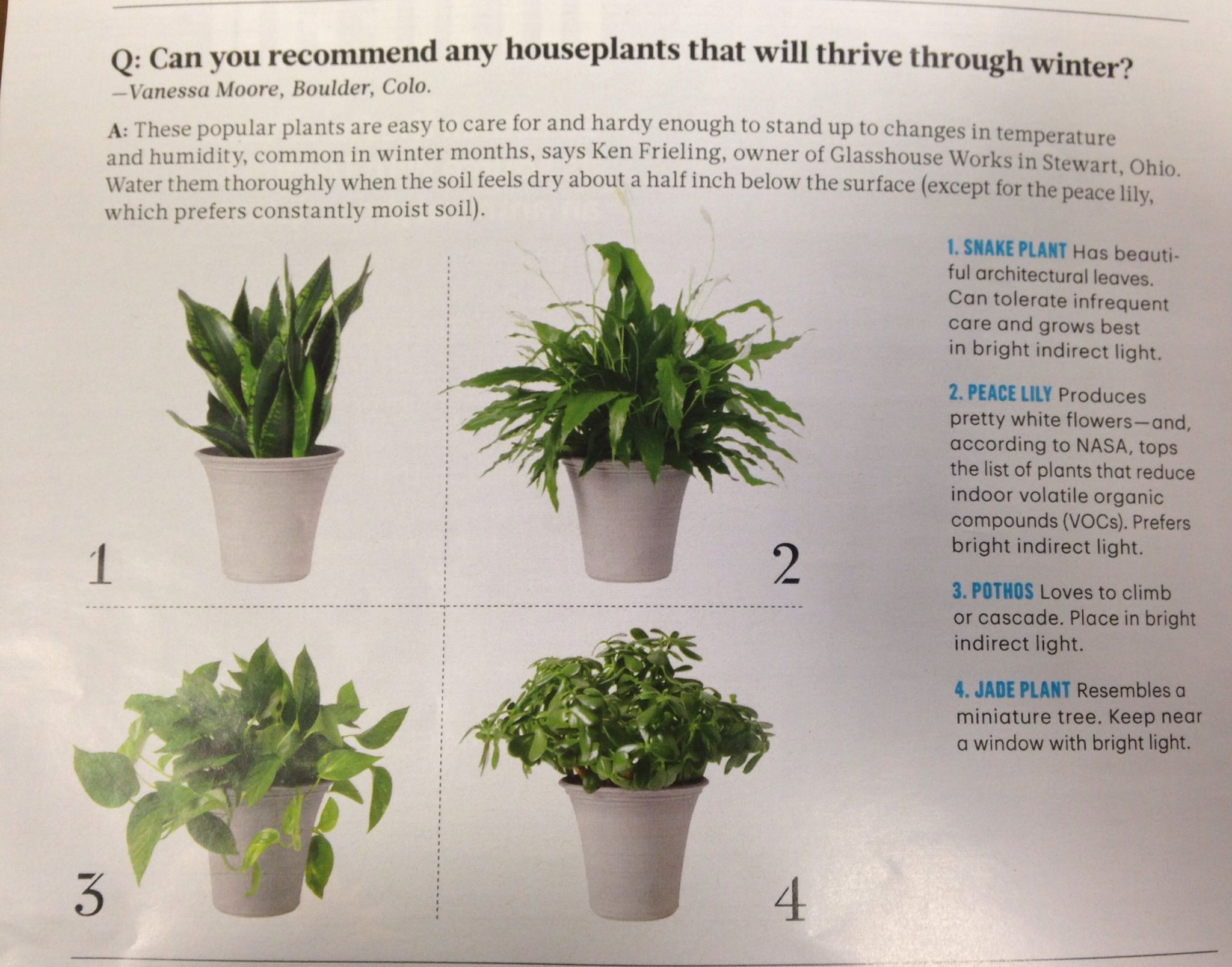 House plants that will survive the winter - from Martha Stewart.