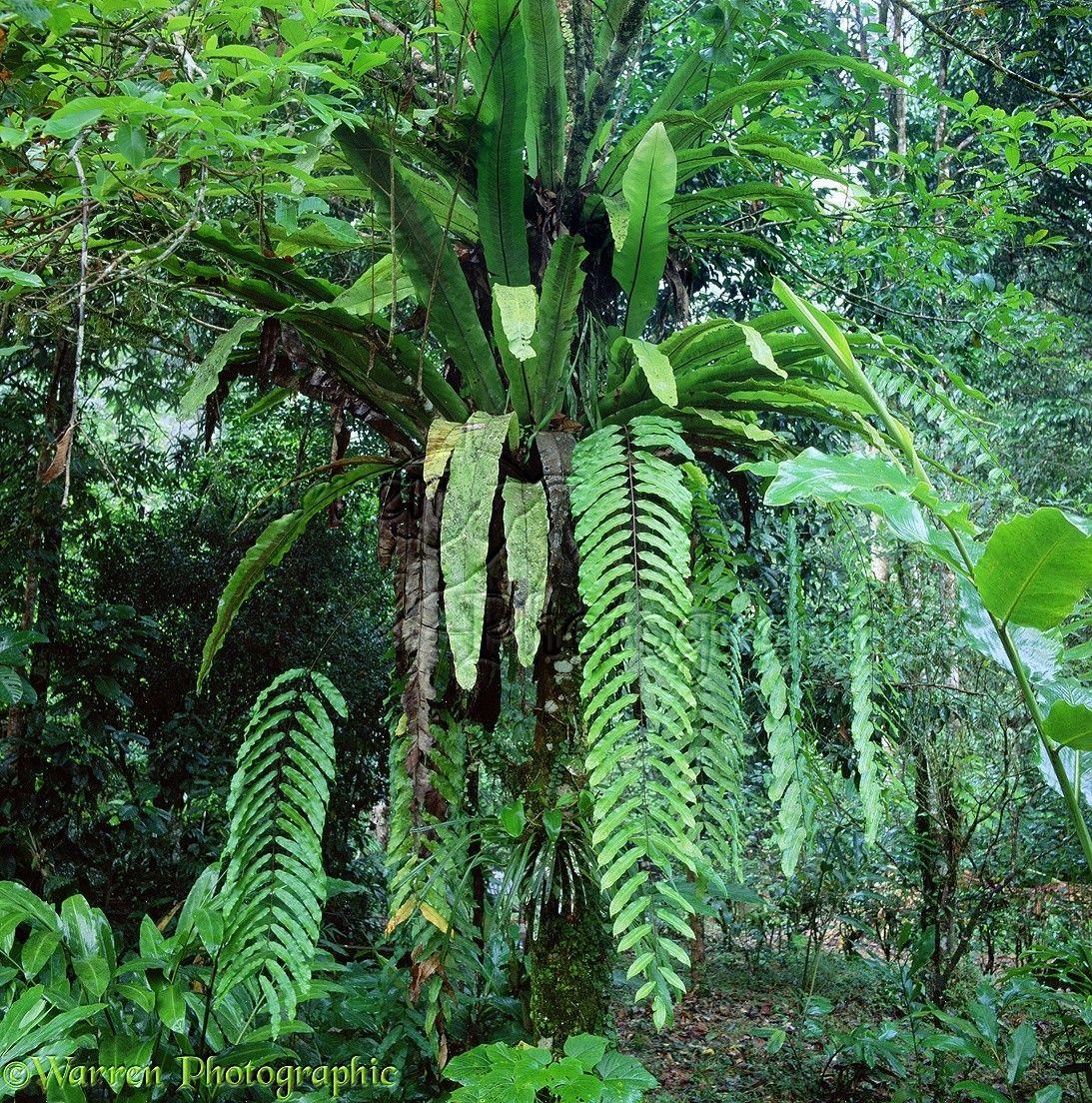 Tropical Rainforest Plants List