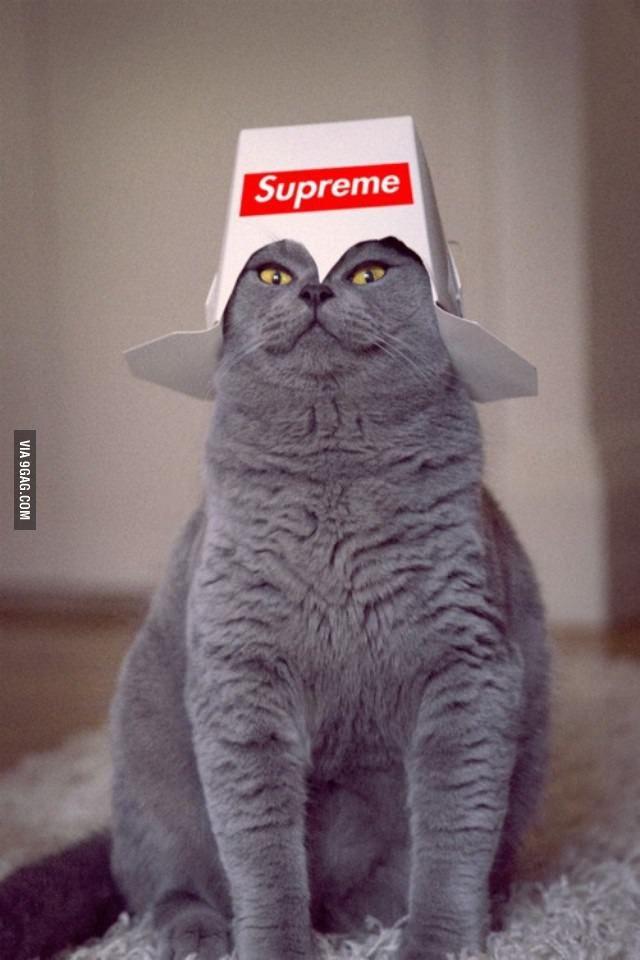 Resultado de imagen de all hail cat