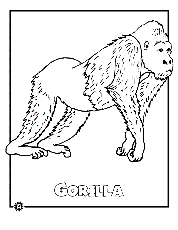 free coloring pages rainforest animals - photo#23