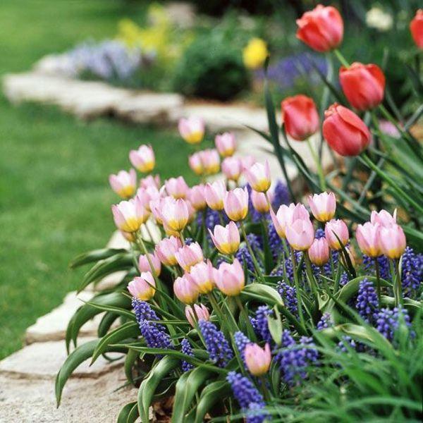 100 Gartengestaltungsideen und Gartentipps für Anfänger | Rosa ...