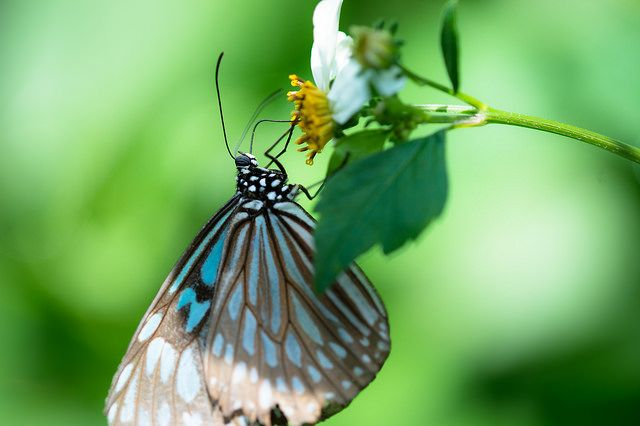 Focus on a Butterfly. Taken with the Micro-Nikkor 200mm f/4D by Takashi Hososhima.