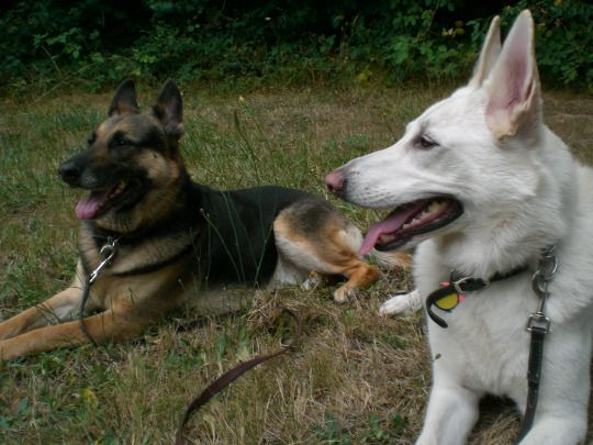 GSDs...Adventures of the Oregon Forest Dog