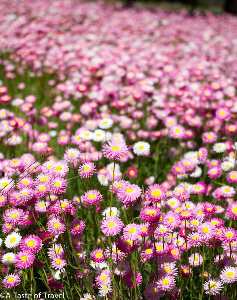 Wildflowers of the West Australian wildflowers