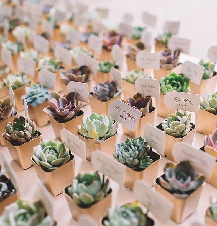 Suculentas de boda – ideas para favores de fiesta originales – decoraciones de la casa
