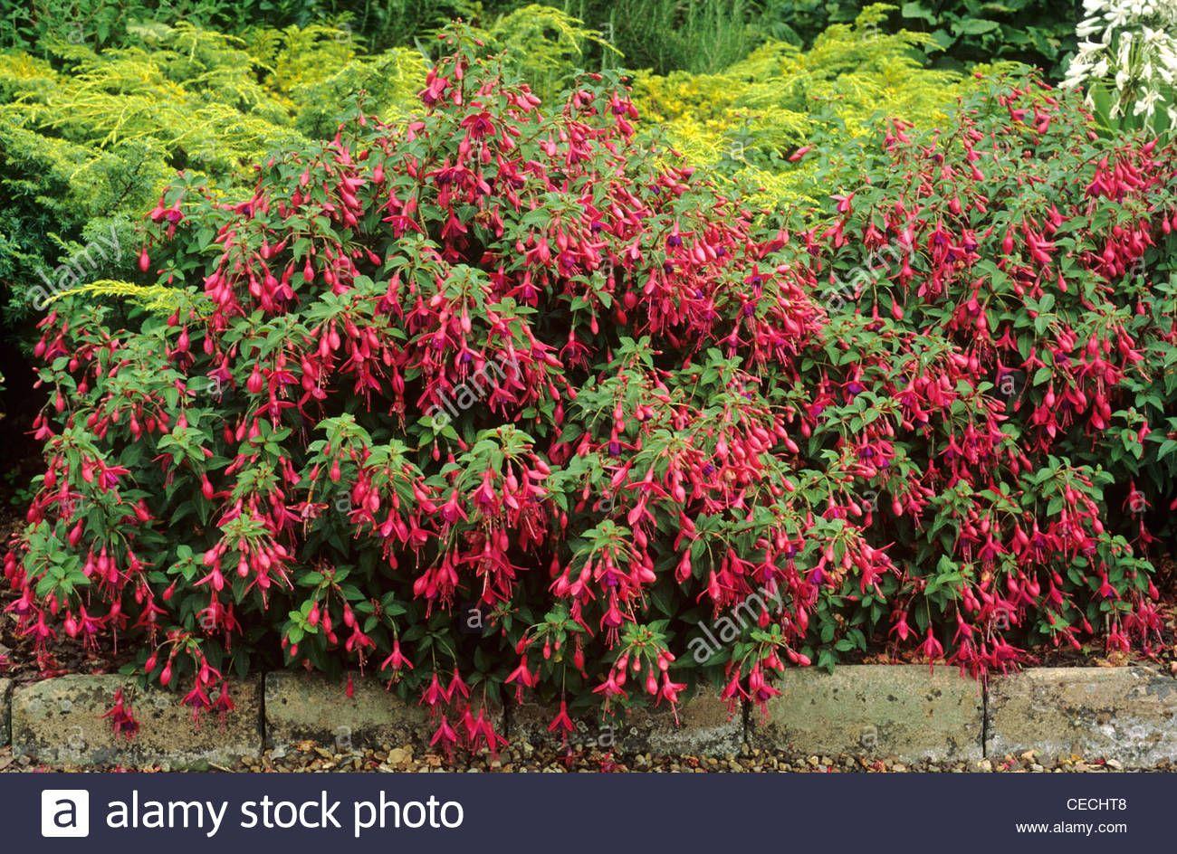 Garden Design Garden Plants Astilbes Hostas Fuchsia And Astilbes 2020 Modern