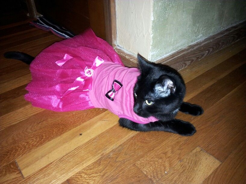 For the love of cat! Yaxin ballerina.