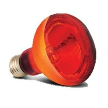 Arcadia Basking Infra Red Heat Lamp 50w Heat Lamps Lamp Arcadia