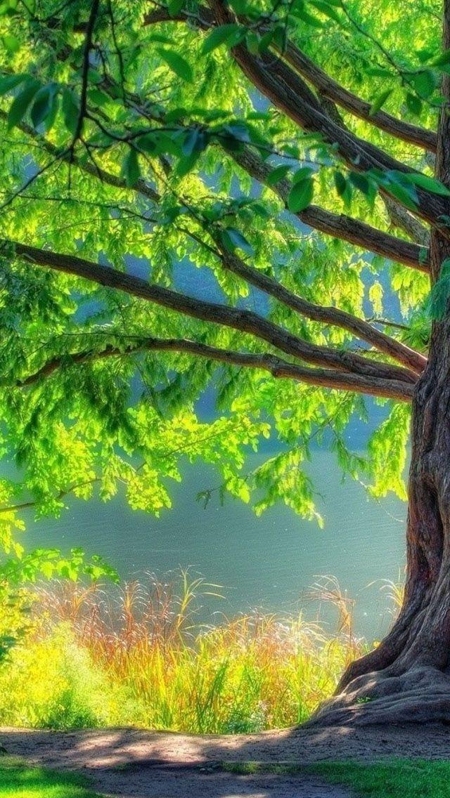 Summer Tree Gardening Pinterest Iphone wallpaper