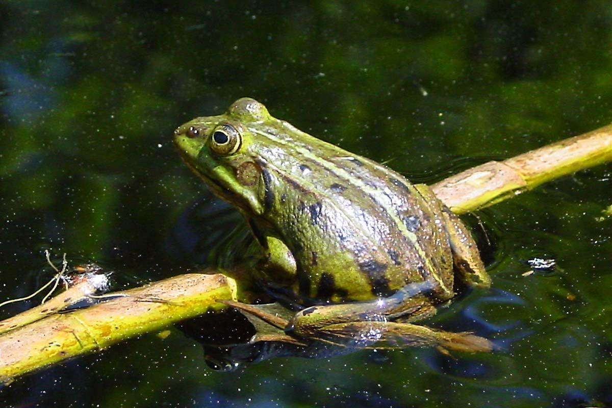 Животный мир болота картинки