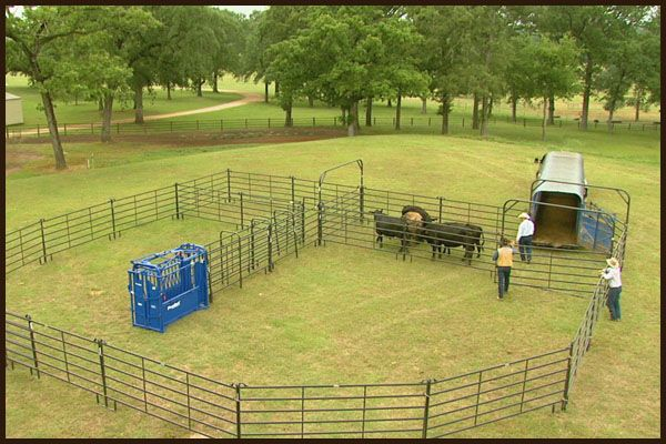 Bud Box Corral System for 100 Head | Cattle, Horses & Pups ...