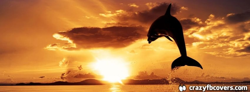 Dolphin Jumping Sunset Summer Facebook Cover Timeline