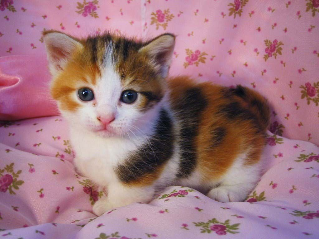 Cute Cats 3 Cute Cats And Kittens Cute Cats Cute Cats And Dogs