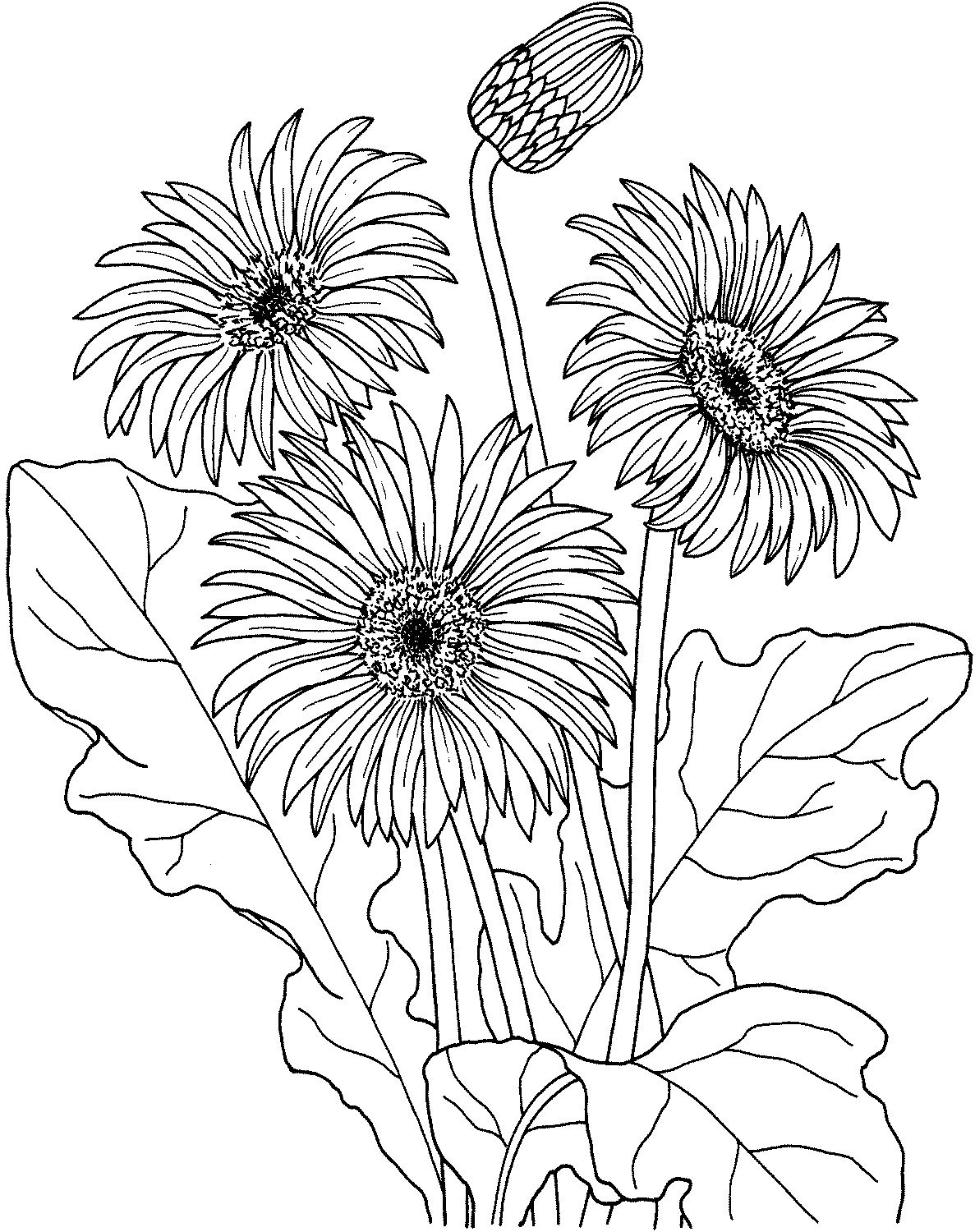 Printable Sun Flower Coloring Pages K5 Worksheets Printable