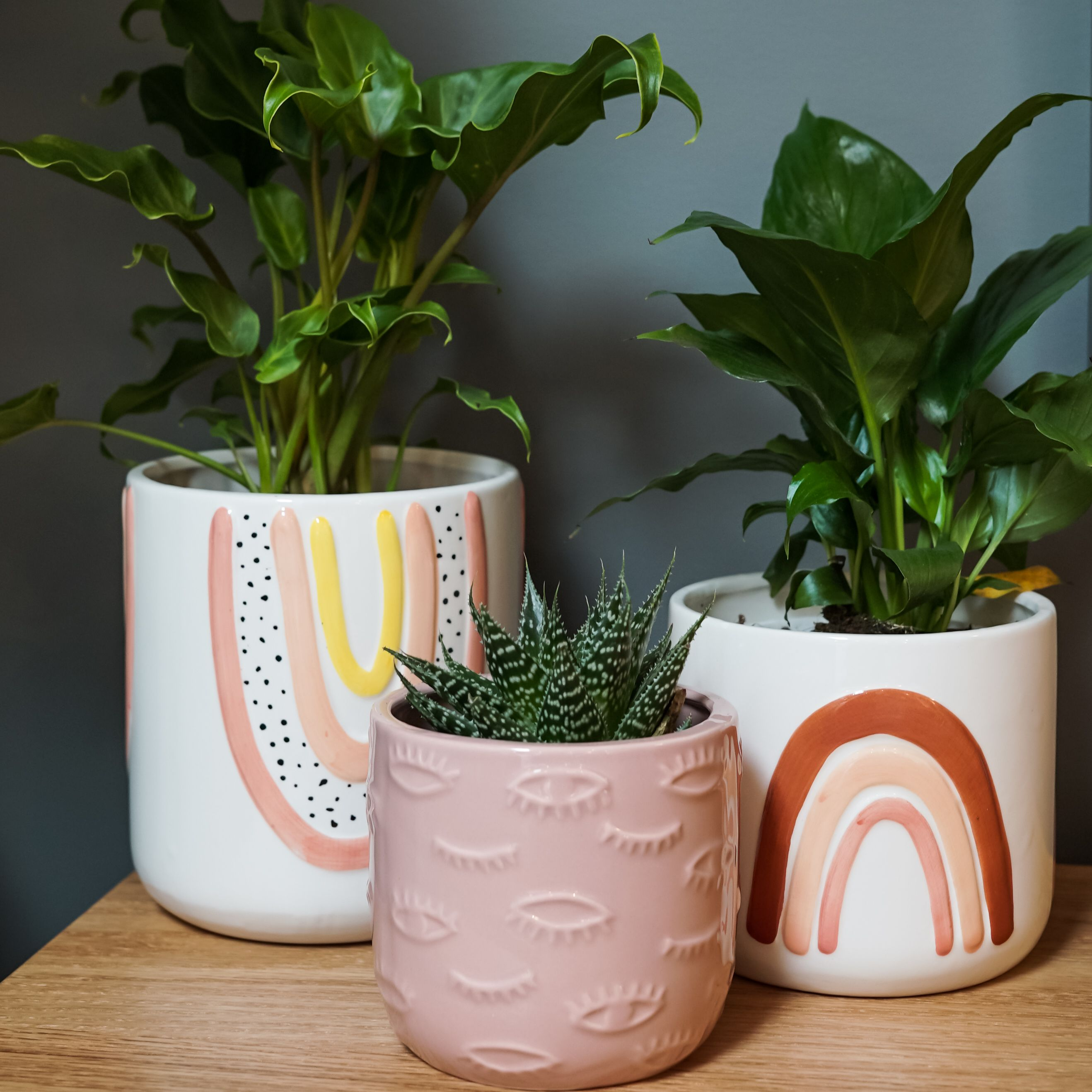 Planters are on trend and we have a huge range of quirky