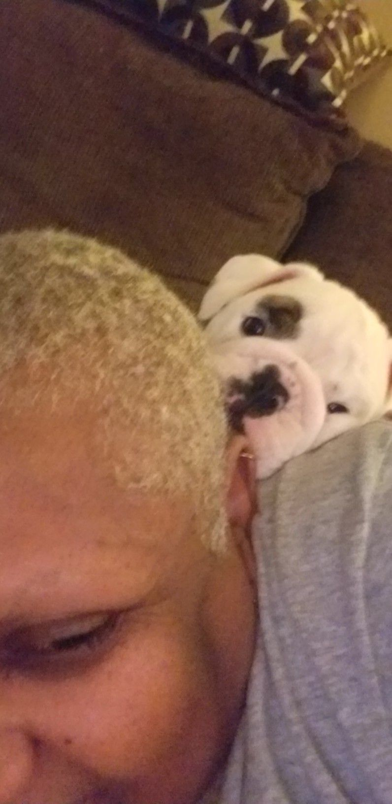 Pin By Iamdaylight On Coco And Other English Bulldogs English Bulldog Bulldog Animals
