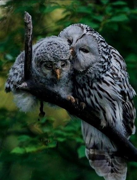 birds eye protein blends, king quilt birds, birds 4 pics 1 ...