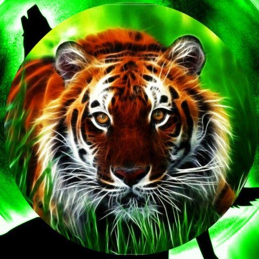 Alis Io Skins Tiger Pictures Animal Wallpaper Animals