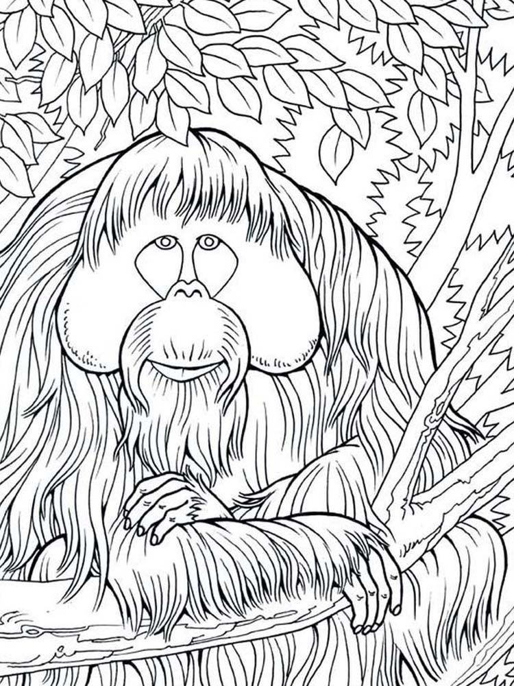 Orangutan Coloring Pages Image Orangutans Are The Only Members Of