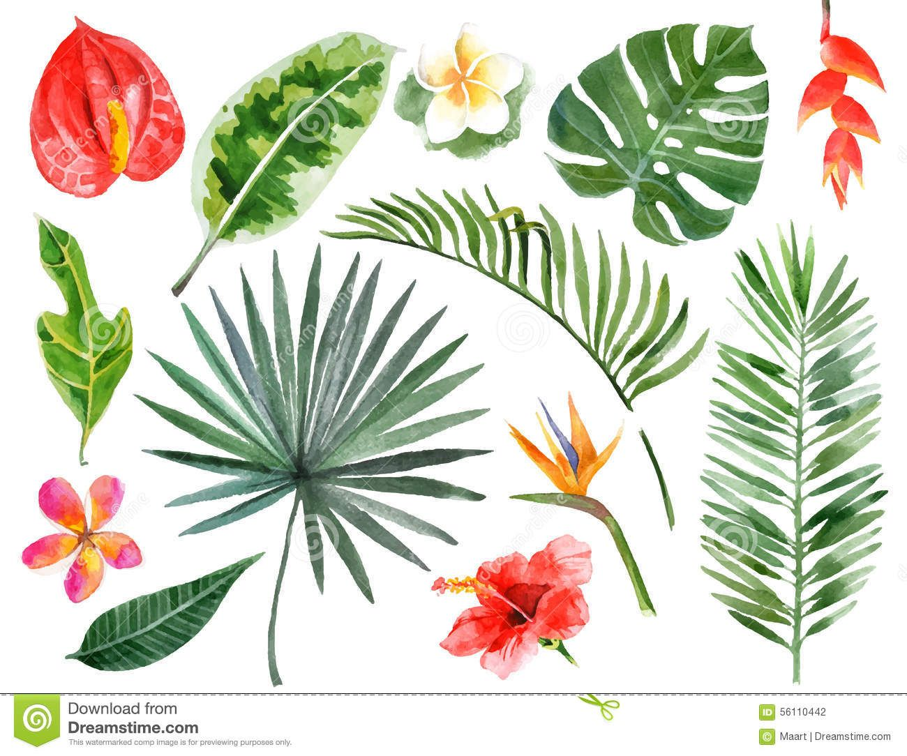 hand drawn watercolor tropical plants download from over