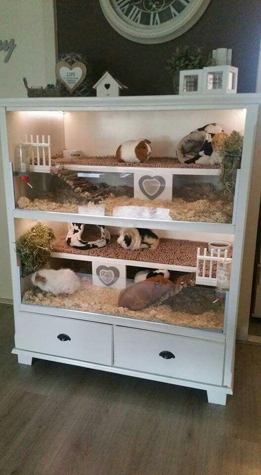 Great idea meerschweinchen meerschweinchen meerschweinchen k fig und meerschweinchen gehege - Kaninchenstall einrichten ...