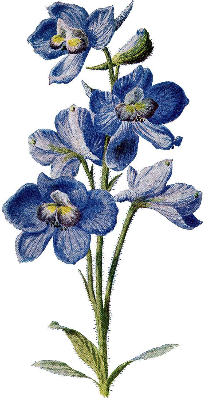 9 Circa 1905 Garden Flower Illustrations - Updated
