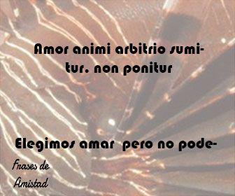 Frases De Amistad En Latin Frases De Aniversario