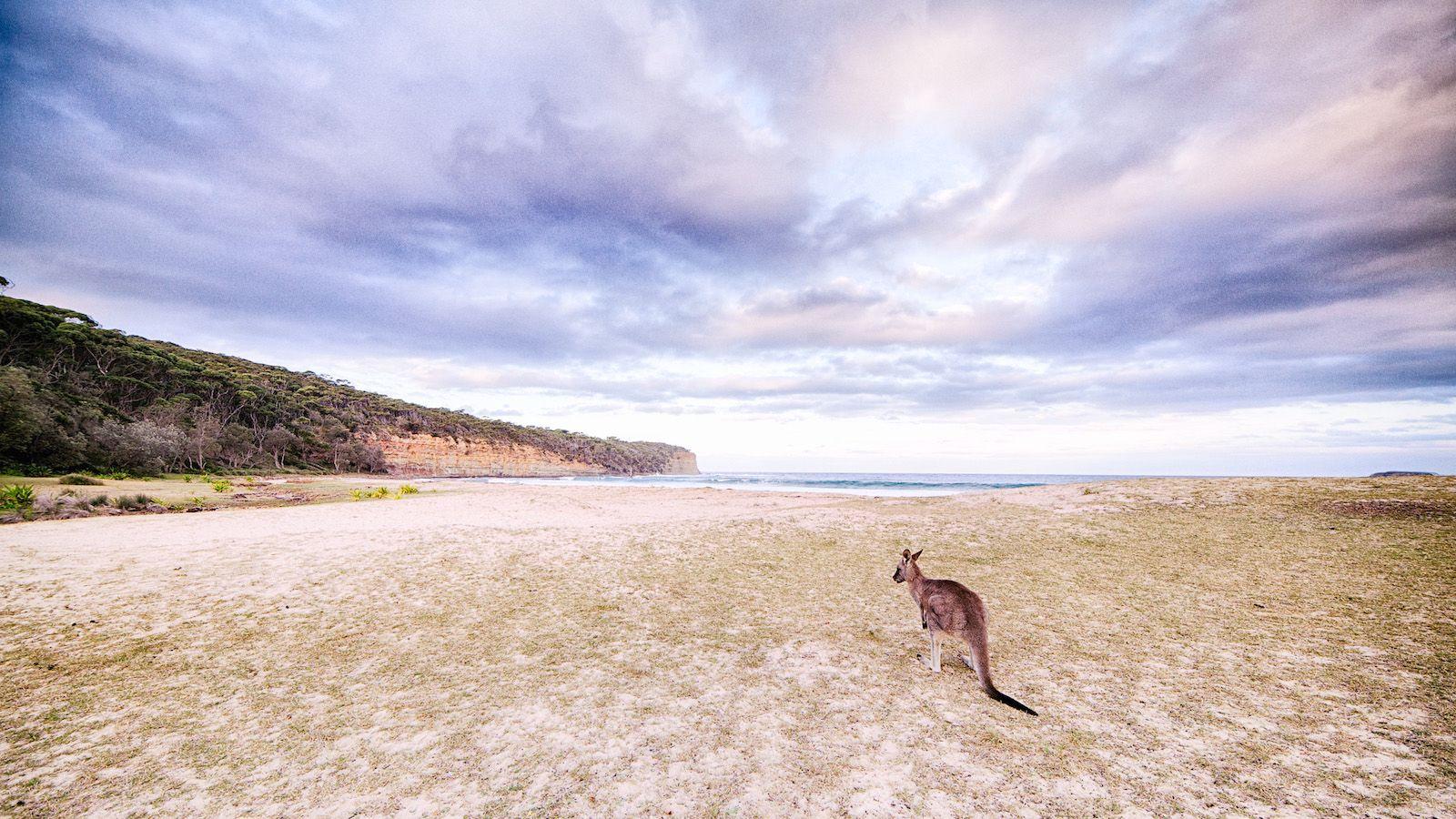 Nieuwe wandelroute op Kangaroo Island staat nu al bekend als mooiste van Australië - National Geographic Traveler Nederland/België
