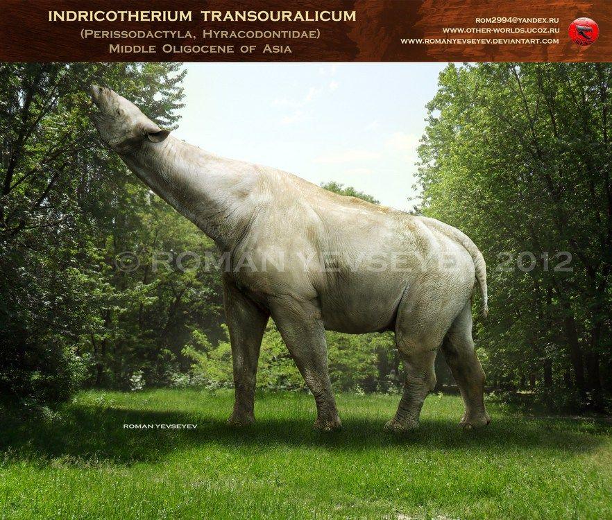 Indricotherium transouralicum by ~RomanYevseyev. Probably ...