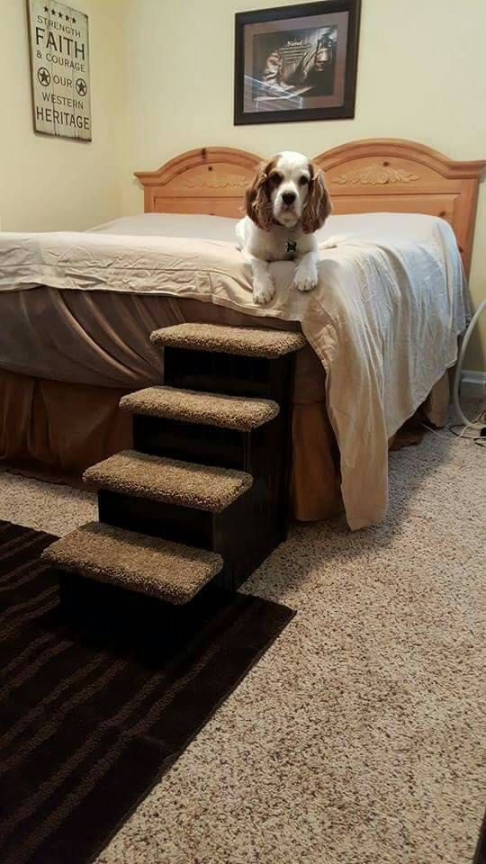 Amazing Dog Steps Cat Stairs Designer Dog Stairs 24 By HamptonBayPetSteps