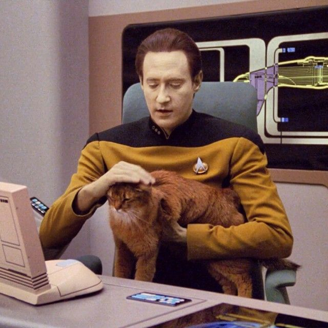 Image result for data star trek cat