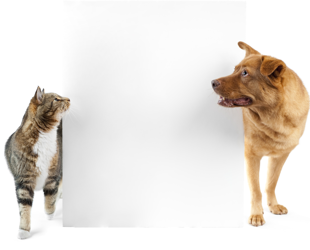 Cat Dog Side Looking Banner Dog Cat Cats Dogs