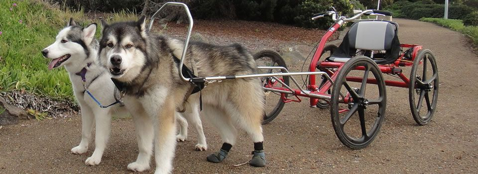 Sacco Dog Carts Urban Mushing 2 Huskies 960x420 Jpg 960 350